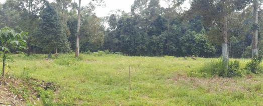 Kelar - Bemban Kangkong (SOLD OUT) 28