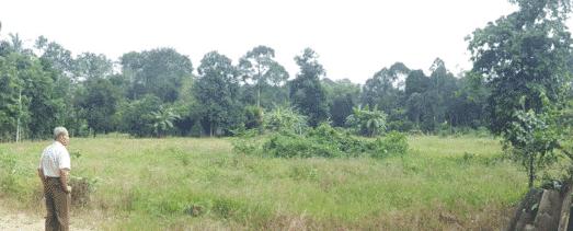 Kelar - Bemban Kangkong (SOLD OUT) 29