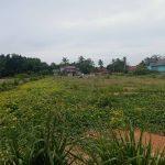Taman Mawar (Mukim Badak Mati) 35