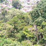 Brezza Hill 79